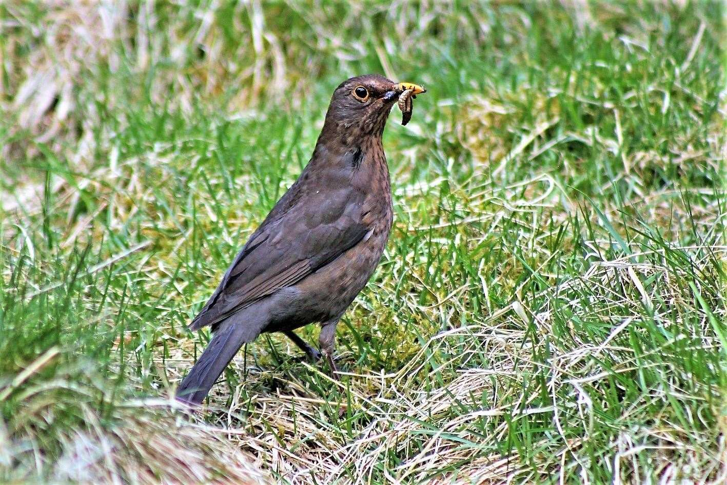 Blackbirds were the most common sightings.